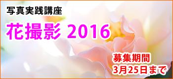 photodays_banner_flower2016